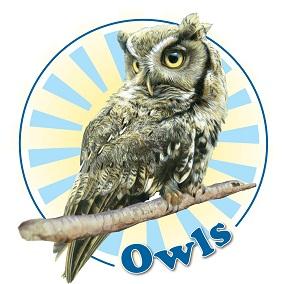 A3 Owls Logo